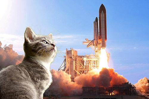 Katze oder Rakete_klein